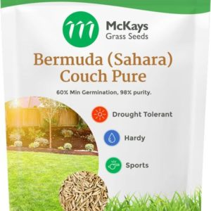 bermuda couch grass seed