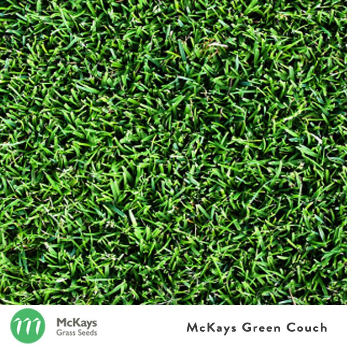 Bermuda Couch Grass Seed Blend