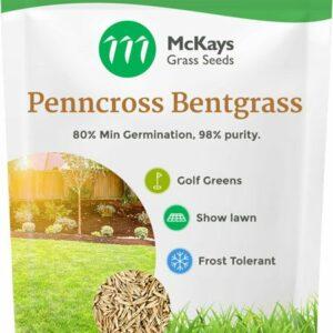 bentgrass penncross seed