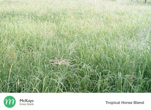 McKays Tropical Horse Pasture Blend