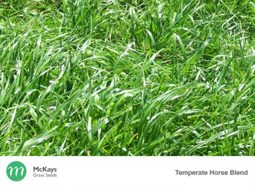 McKays Temperate Horse Pasture Blend