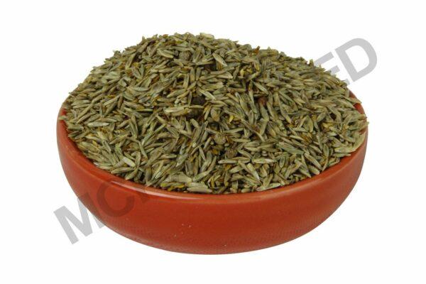 Compadre Zoysia Grass Seed Blend
